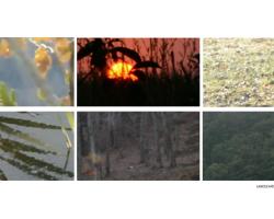 3-landscape-2-2017-18-616-video-video-still